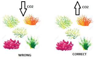 coral reefs and carbon relationship